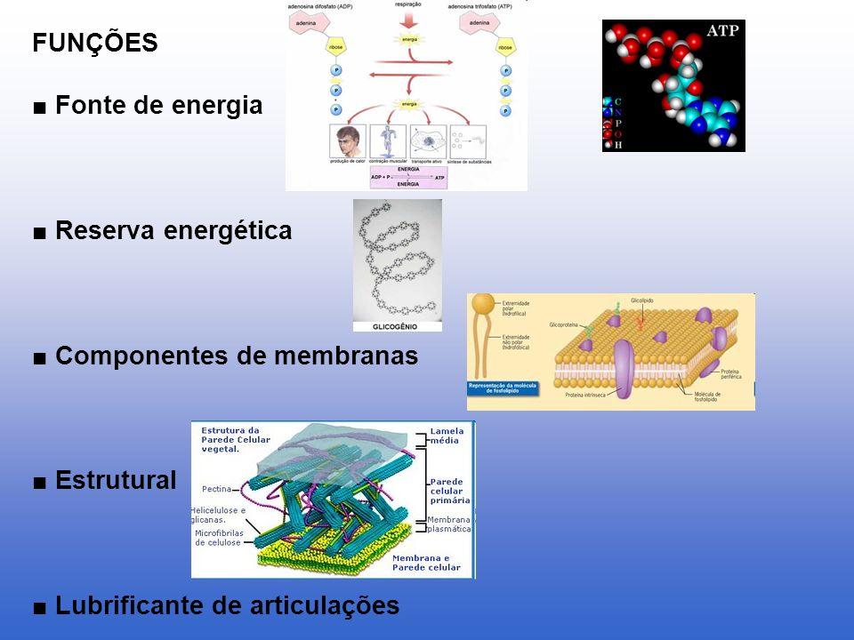 FUNÇÕES Fonte de energia Reserva energética Componentes de membranas Estrutural Lubrificante de articulações