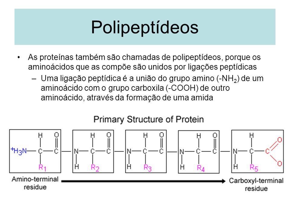 Polipeptídeos As proteínas também são chamadas de polipeptídeos, porque os aminoácidos que as compõe são unidos por ligações peptídicas –Uma ligação p