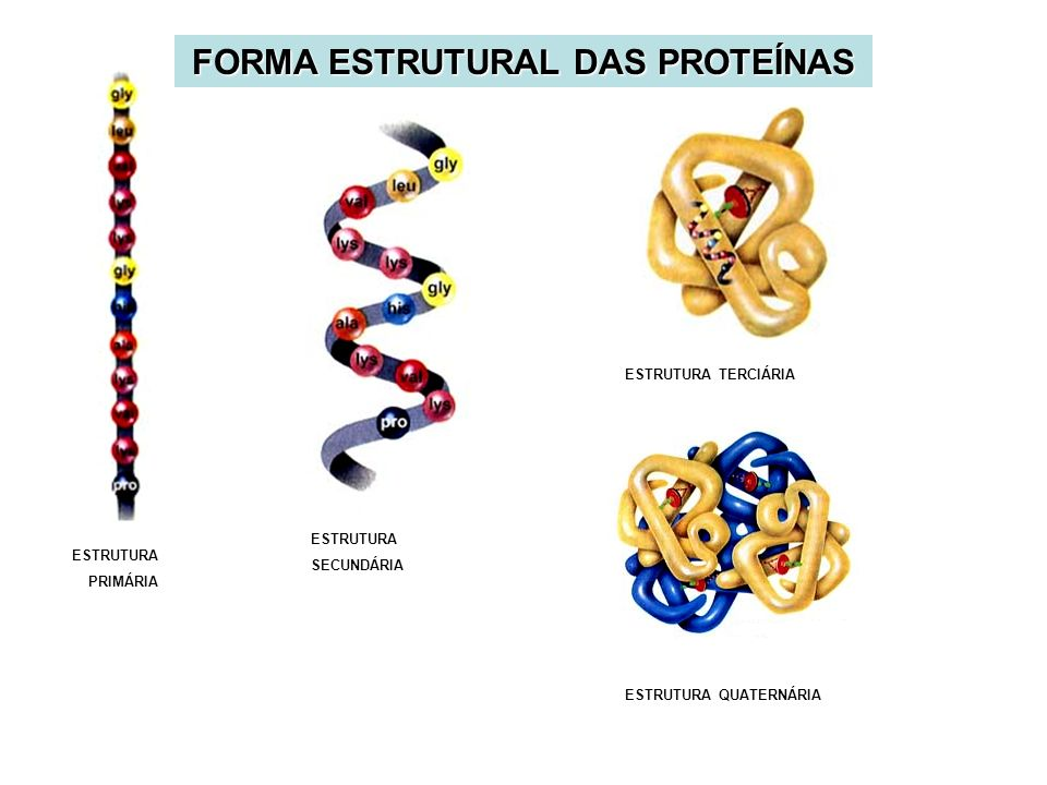FORMA ESTRUTURAL DAS PROTEÍNAS ESTRUTURA QUATERNÁRIA ESTRUTURA PRIMÁRIA ESTRUTURA SECUNDÁRIA ESTRUTURA TERCIÁRIA