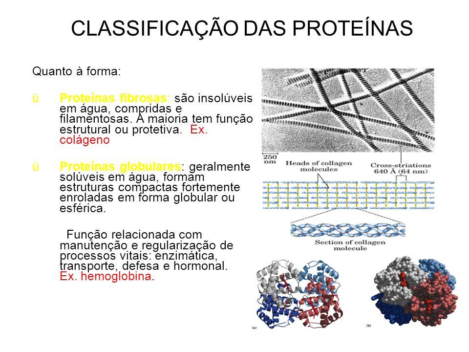 CLASSIFICAÇÃO DAS PROTEÍNAS Quanto à forma: üProteínas fibrosas: são insolúveis em água, compridas e filamentosas. A maioria tem função estrutural ou