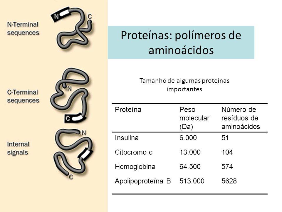 Proteínas: polímeros de aminoácidos ProteínaPeso molecular (Da) Número de resíduos de aminoácidos Insulina6.00051 Citocromo c13.000104 Hemoglobina64.5