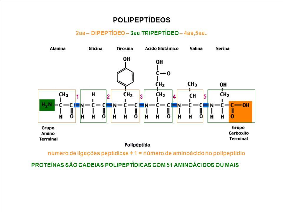 POLIPEPTÍDEOS 32154 número de ligações peptídicas + 1 = número de aminoácido no polipeptídio PROTEÍNAS SÃO CADEIAS POLIPEPTÍDICAS COM 51 AMINOÁCIDOS O