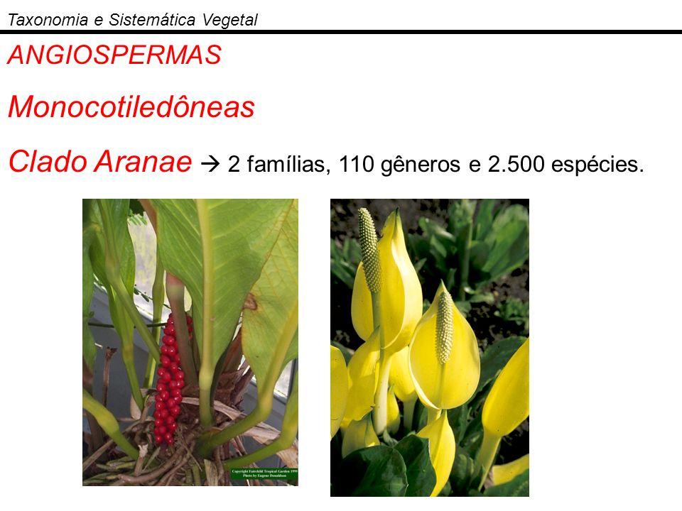 ANGIOSPERMAS Monocotiledôneas Clado Aranae 2 famílias, 110 gêneros e 2.500 espécies. Taxonomia e Sistemática Vegetal