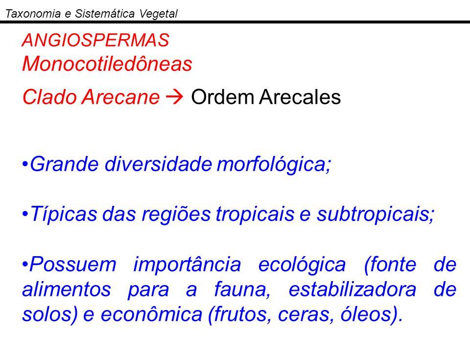 ANGIOSPERMAS Monocotiledôneas Clado Arecane Ordem Arecales Grande diversidade morfológica; Típicas das regiões tropicais e subtropicais; Possuem impor
