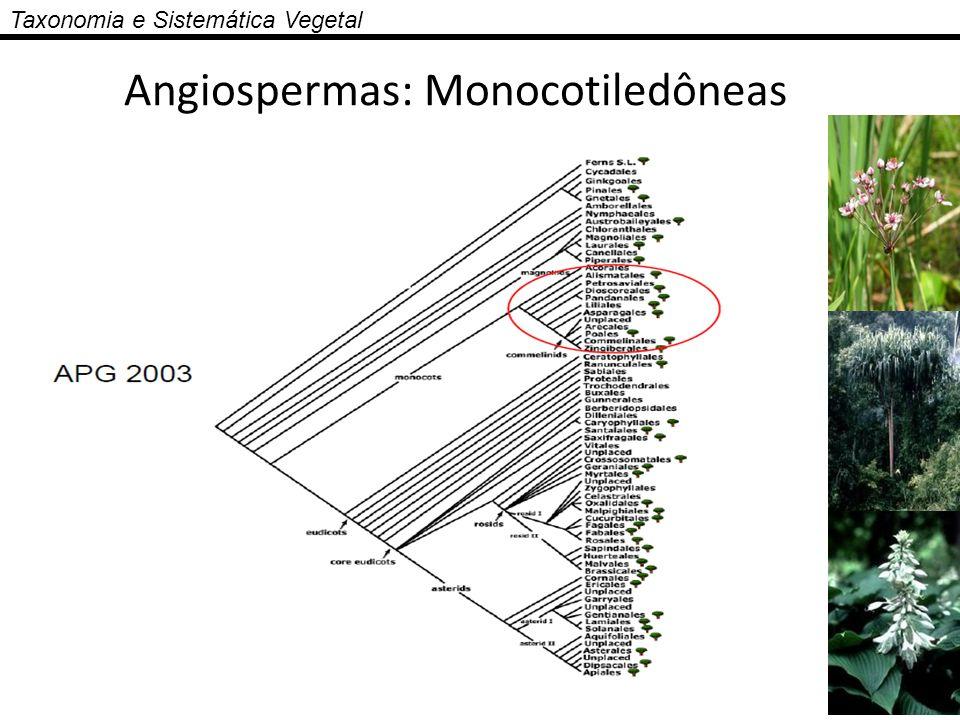 Taxonomia e Sistemática Vegetal Angiospermas: Monocotiledôneas