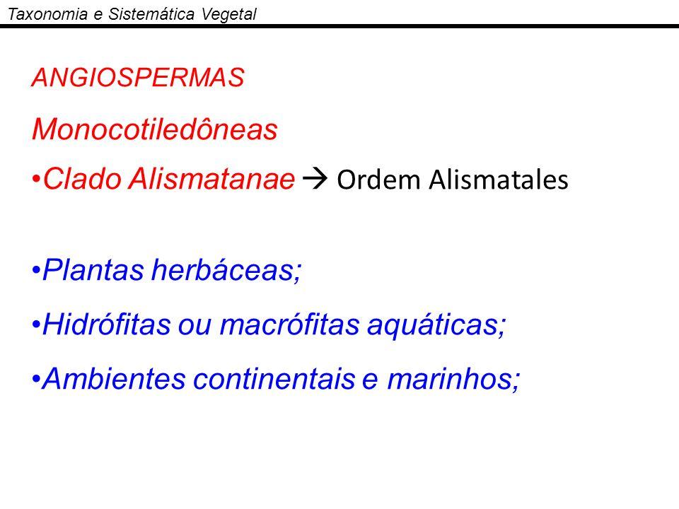 Taxonomia e Sistemática Vegetal ANGIOSPERMAS Monocotiledôneas Clado Alismatanae Ordem Alismatales Plantas herbáceas; Hidrófitas ou macrófitas aquática
