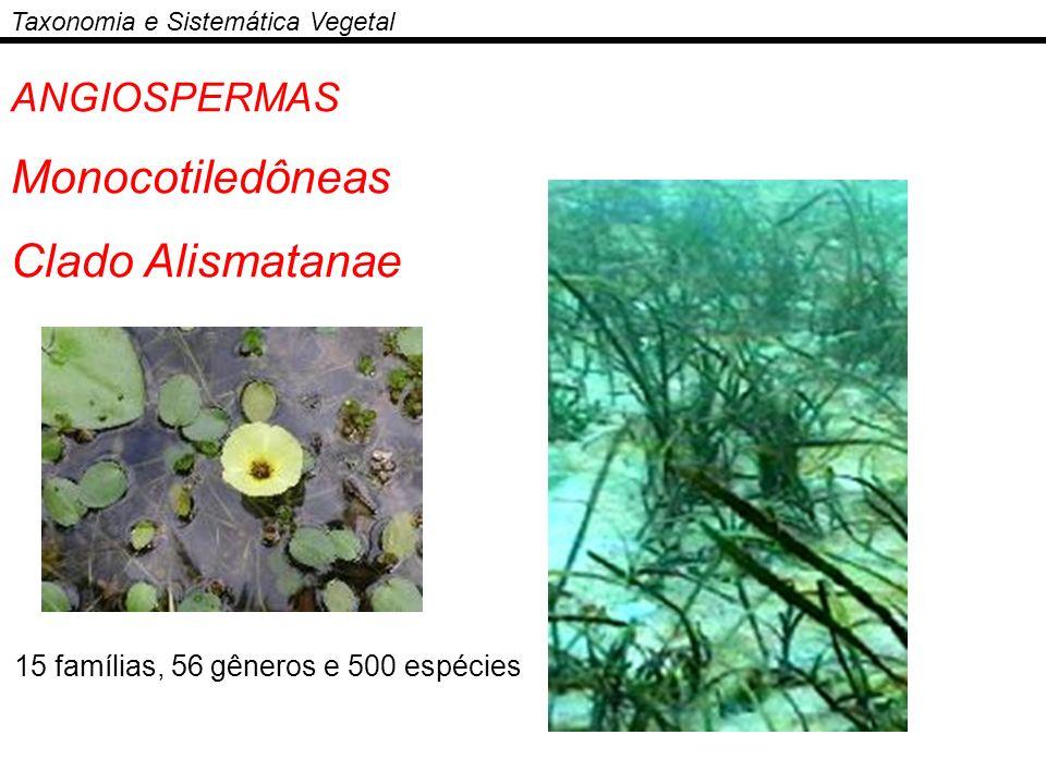 Taxonomia e Sistemática Vegetal ANGIOSPERMAS Monocotiledôneas Clado Alismatanae 15 famílias, 56 gêneros e 500 espécies