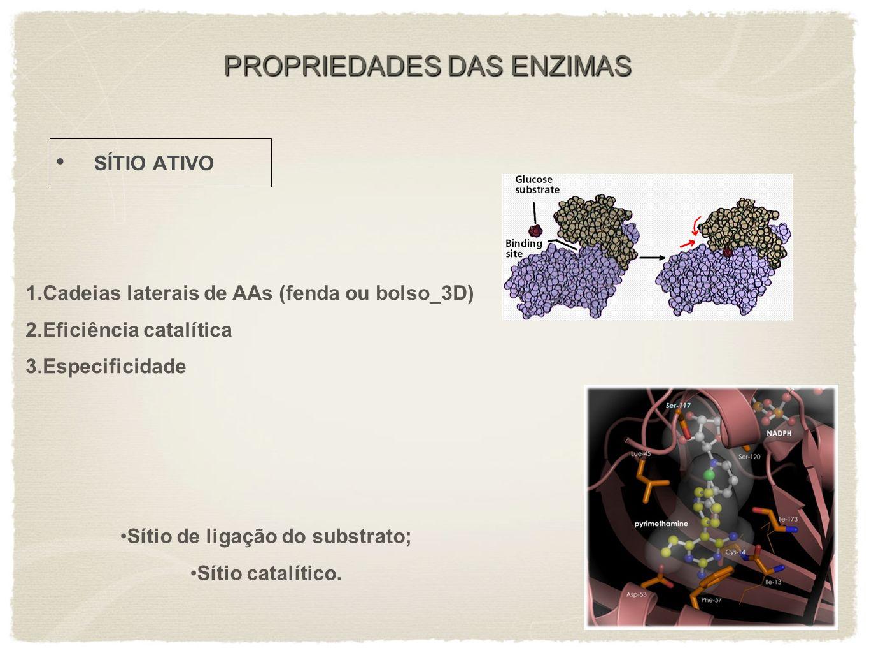 PROPRIEDADES DAS ENZIMAS SÍTIO ATIVO Sítio de ligação do substrato; Sítio catalítico. 1.Cadeias laterais de AAs (fenda ou bolso_3D) 2.Eficiência catal