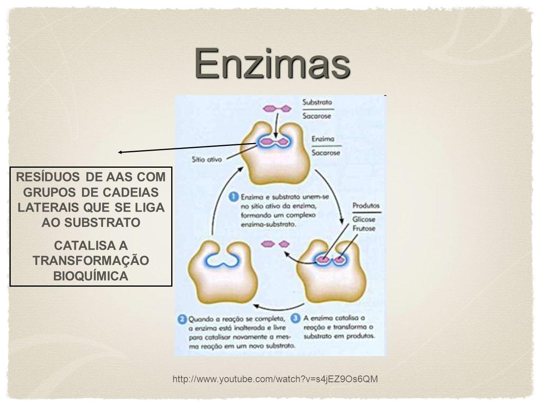 Enzimas OS CATALISADORES AUMENTAM A VELOCIDADE DAS REAÇÕES POR DIMINUÍREM AS ENERGIAS DE ATIVAÇÃO (interação covalente e fracas entre enzima e substrato); NA EVOLUÇÃO, AS ENZIMAS DESENVOLVERAM-SE PARA DIMINUIR SELETIVAMENTE AS ENERGIAS DE ATIVAÇÃO DAS REAÇÕES NECESSÁRIAS PARA A SOBREVIVÊNCIA CELULAR Estado de transição