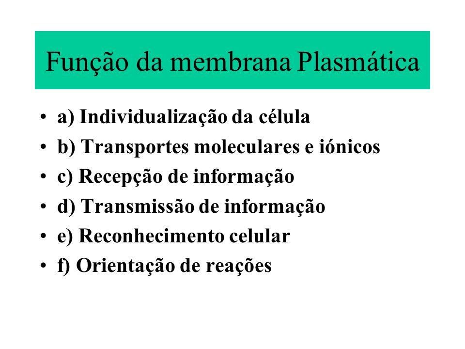 Função da membrana Plasmática a) Individualização da célula b) Transportes moleculares e iónicos c) Recepção de informação d) Transmissão de informaçã