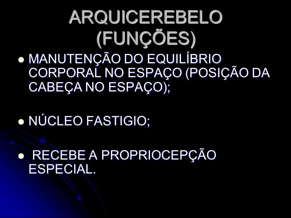 ARQUICEREBELO (FUNÇÕES) MANUTENÇÃO DO EQUILÍBRIO CORPORAL NO ESPAÇO (POSIÇÃO DA CABEÇA NO ESPAÇO); MANUTENÇÃO DO EQUILÍBRIO CORPORAL NO ESPAÇO (POSIÇÃ