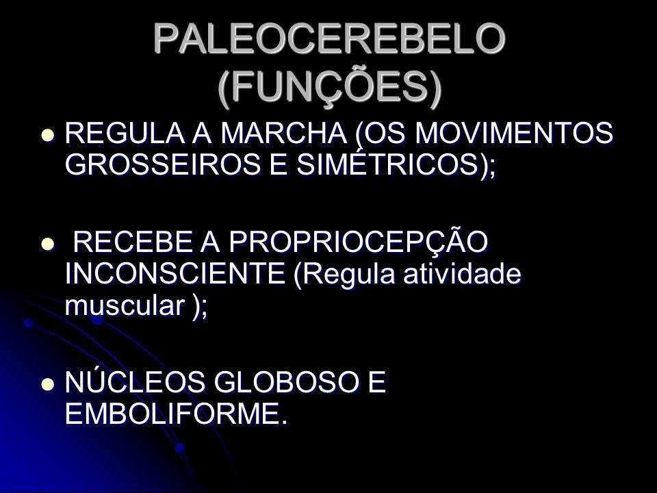 PALEOCEREBELO (FUNÇÕES) REGULA A MARCHA (OS MOVIMENTOS GROSSEIROS E SIMÉTRICOS); REGULA A MARCHA (OS MOVIMENTOS GROSSEIROS E SIMÉTRICOS); RECEBE A PRO