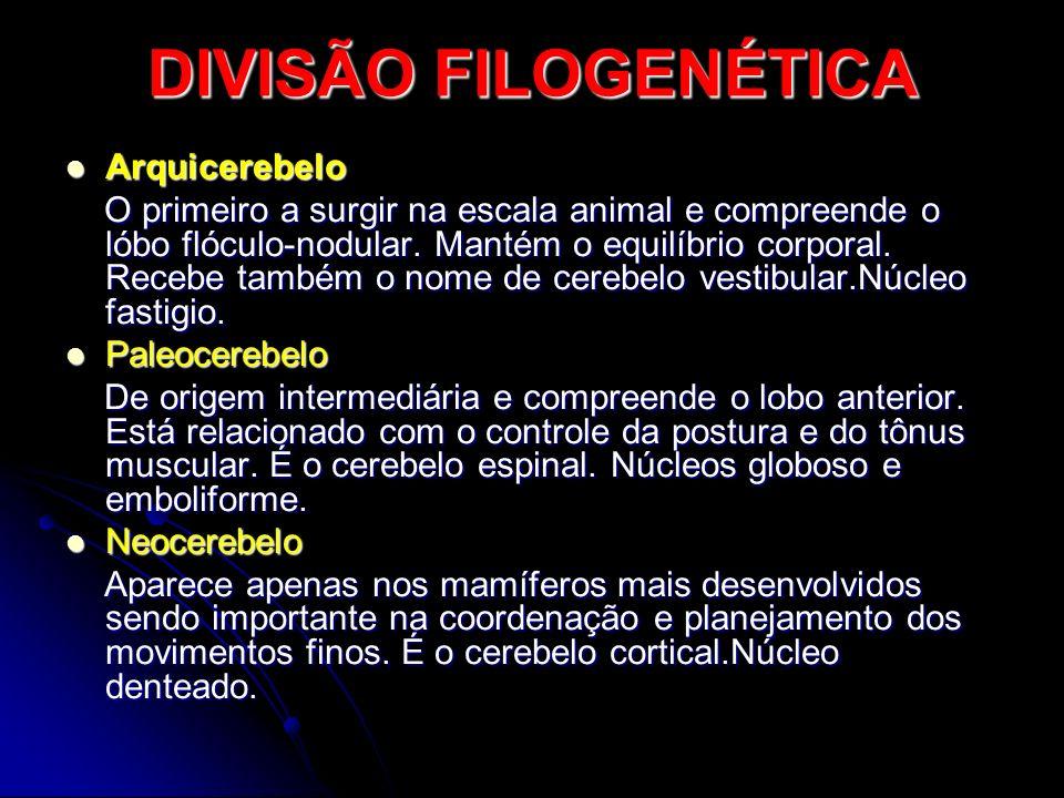 DIVISÃO FILOGENÉTICA Arquicerebelo Arquicerebelo O primeiro a surgir na escala animal e compreende o lóbo flóculo-nodular. Mantém o equilíbrio corpora