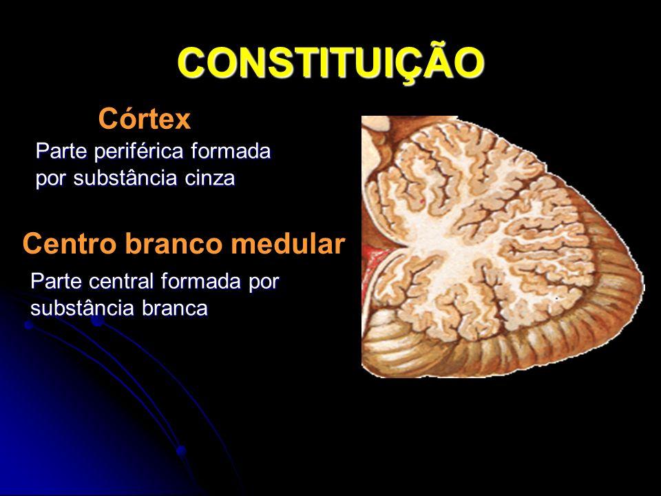 CONSTITUIÇÃO Córtex Parte periférica formada por substância cinza Centro branco medular Parte central formada por substância branca