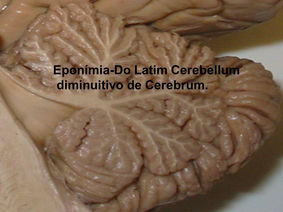 Eponímia-Do Latim Cerebellum diminuitivo de Cerebrum.
