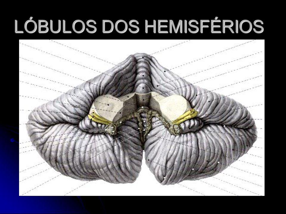 LÓBULOS DOS HEMISFÉRIOS
