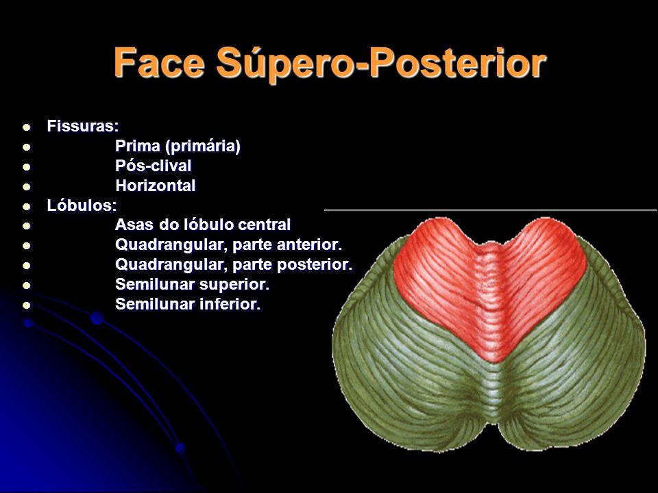Face Súpero-Posterior Fissuras: Fissuras: Prima (primária) Prima (primária) Pós-clival Pós-clival Horizontal Horizontal Lóbulos: Lóbulos: Asas do lóbu