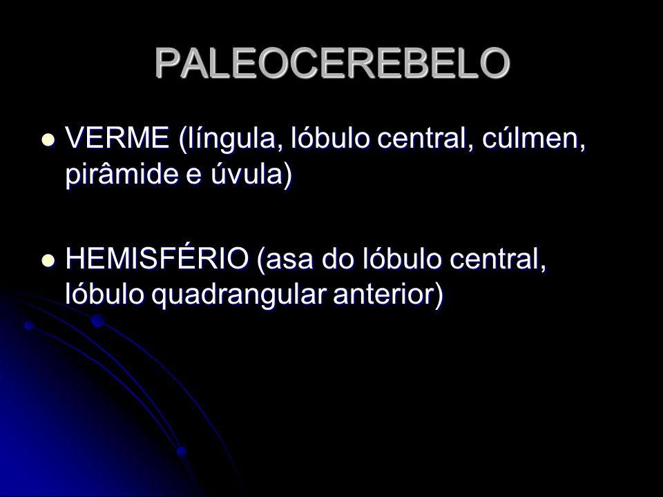 PALEOCEREBELO VERME (língula, lóbulo central, cúlmen, pirâmide e úvula) VERME (língula, lóbulo central, cúlmen, pirâmide e úvula) HEMISFÉRIO (asa do l
