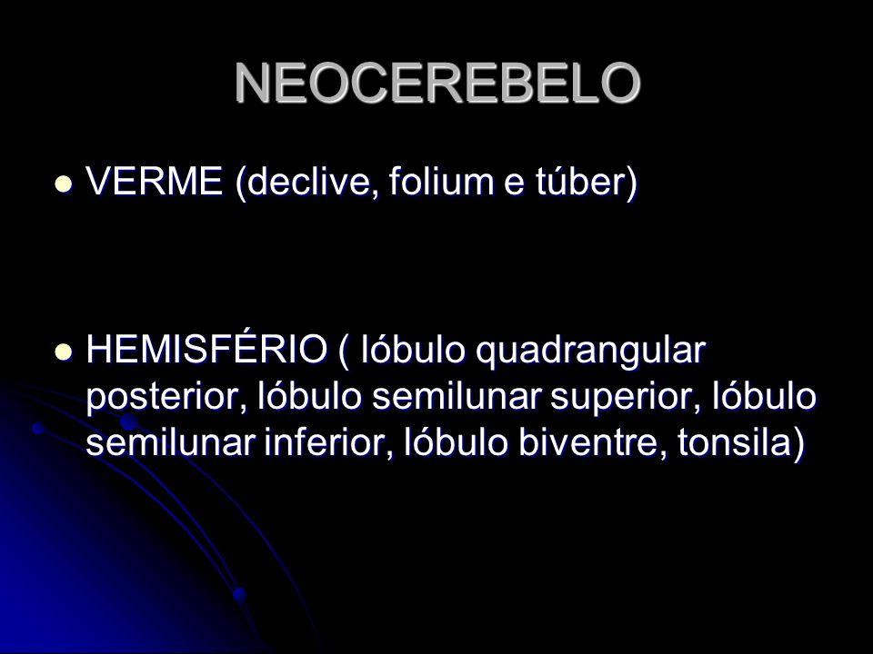 NEOCEREBELO VERME (declive, folium e túber) VERME (declive, folium e túber) HEMISFÉRIO ( lóbulo quadrangular posterior, lóbulo semilunar superior, lób