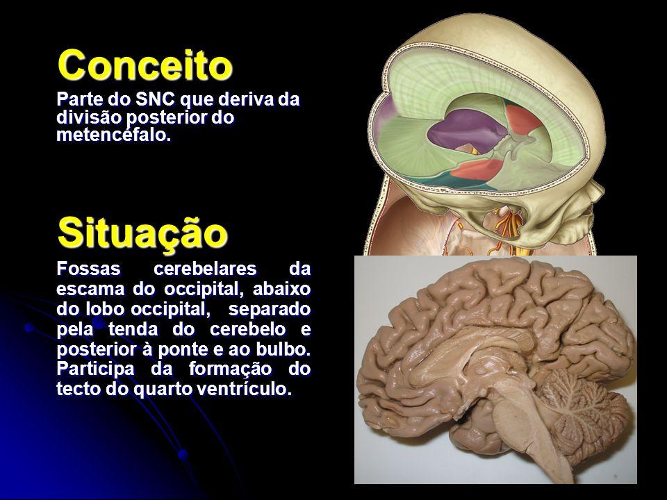 Conceito Parte do SNC que deriva da divisão posterior do metencéfalo. Situação Fossas cerebelares da escama do occipital, abaixo do lobo occipital, se