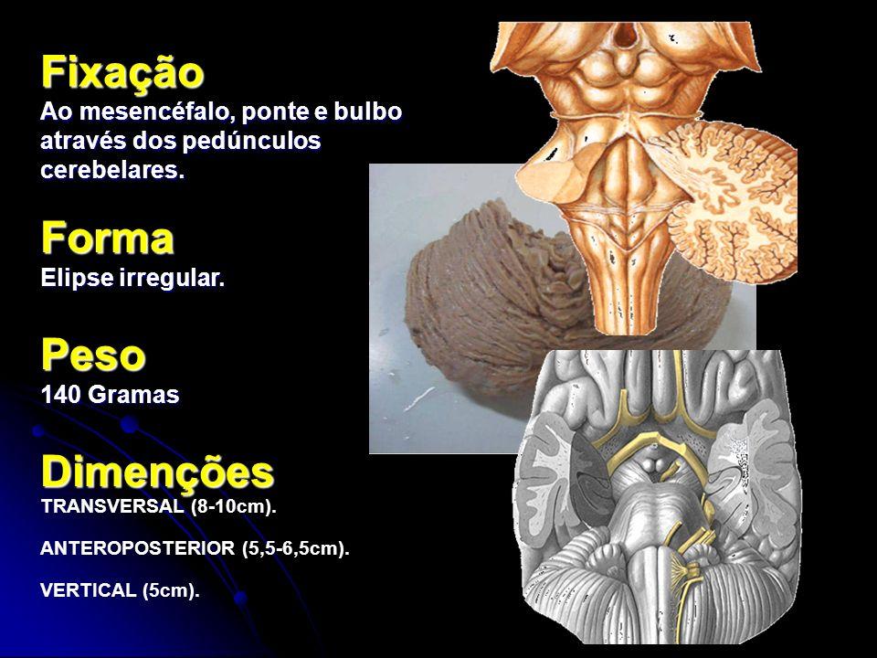 Fixação Ao mesencéfalo, ponte e bulbo através dos pedúnculos cerebelares. Forma Elipse irregular. Peso 140 Gramas Dimenções TRANSVERSAL (8-10cm). ANTE
