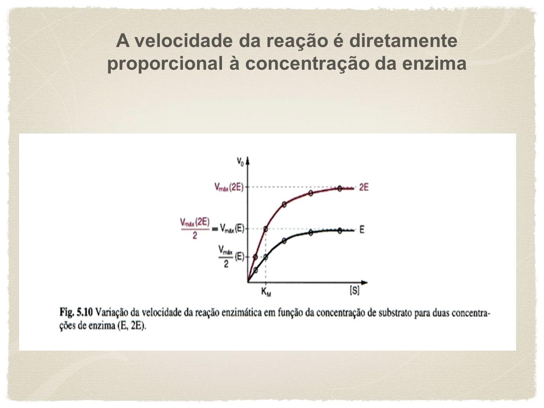A velocidade da reação é diretamente proporcional à concentração da enzima