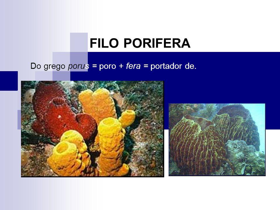 1.São organismos bastante antigo, datando desde o cambriano inferior; 2.