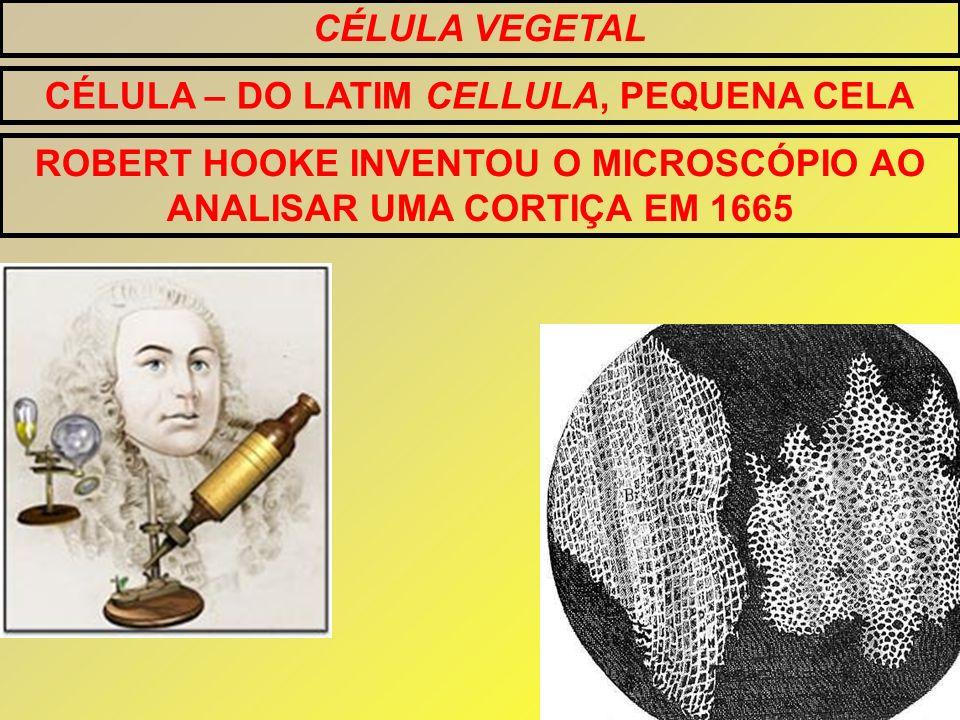 CÉLULA VEGETAL CÉLULA – DO LATIM CELLULA, PEQUENA CELA ROBERT HOOKE INVENTOU O MICROSCÓPIO AO ANALISAR UMA CORTIÇA EM 1665
