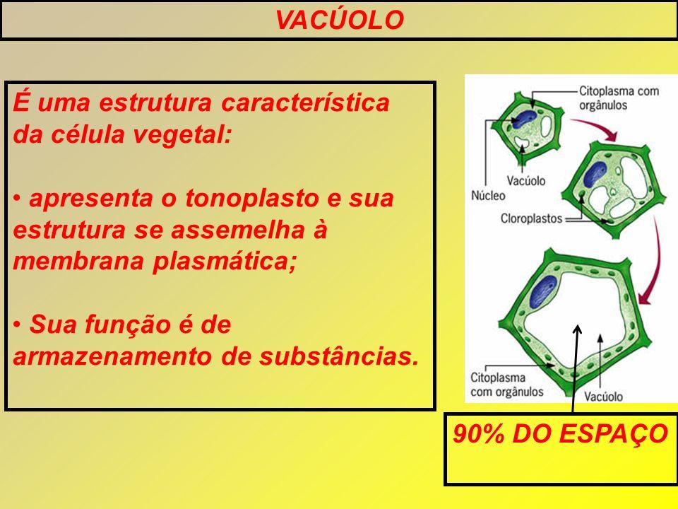 VACÚOLO É uma estrutura característica da célula vegetal: apresenta o tonoplasto e sua estrutura se assemelha à membrana plasmática; Sua função é de a