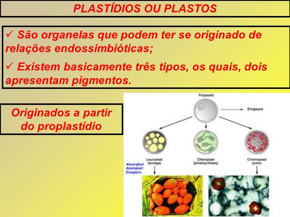 PLASTÍDIOS OU PLASTOS São organelas que podem ter se originado de relações endossimbióticas; Existem basicamente três tipos, os quais, dois apresentam