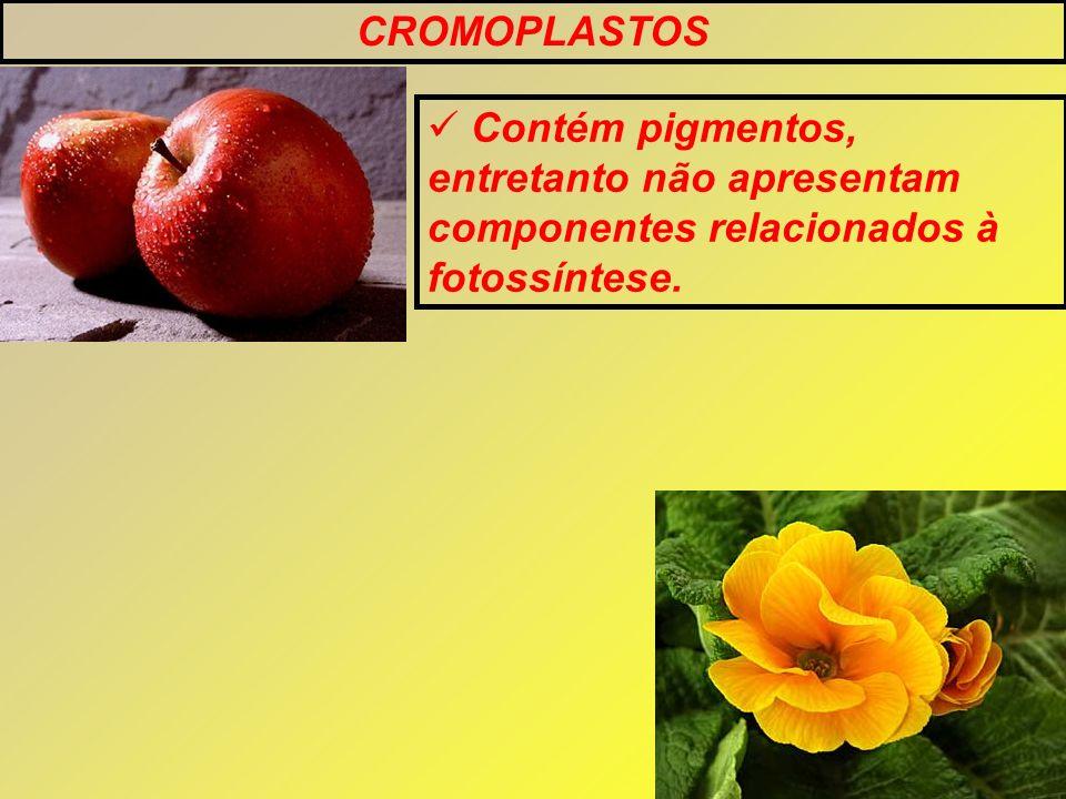 CROMOPLASTOS Contém pigmentos, entretanto não apresentam componentes relacionados à fotossíntese.