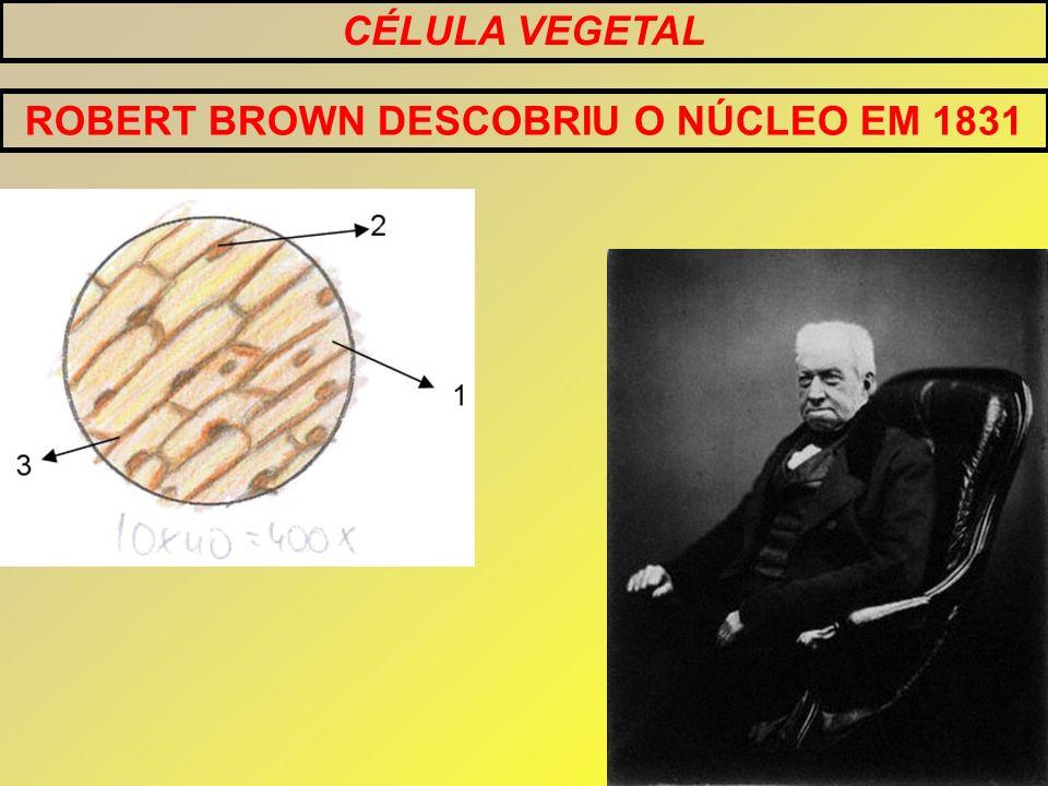 CÉLULA VEGETAL ROBERT BROWN DESCOBRIU O NÚCLEO EM 1831