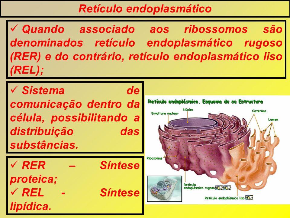 Retículo endoplasmático Quando associado aos ribossomos são denominados retículo endoplasmático rugoso (RER) e do contrário, retículo endoplasmático l