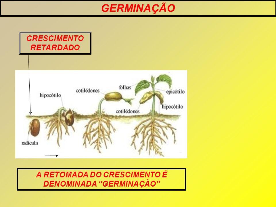 GERMINAÇÃO A RETOMADA DO CRESCIMENTO É DENOMINADA GERMINAÇÃO CRESCIMENTO RETARDADO