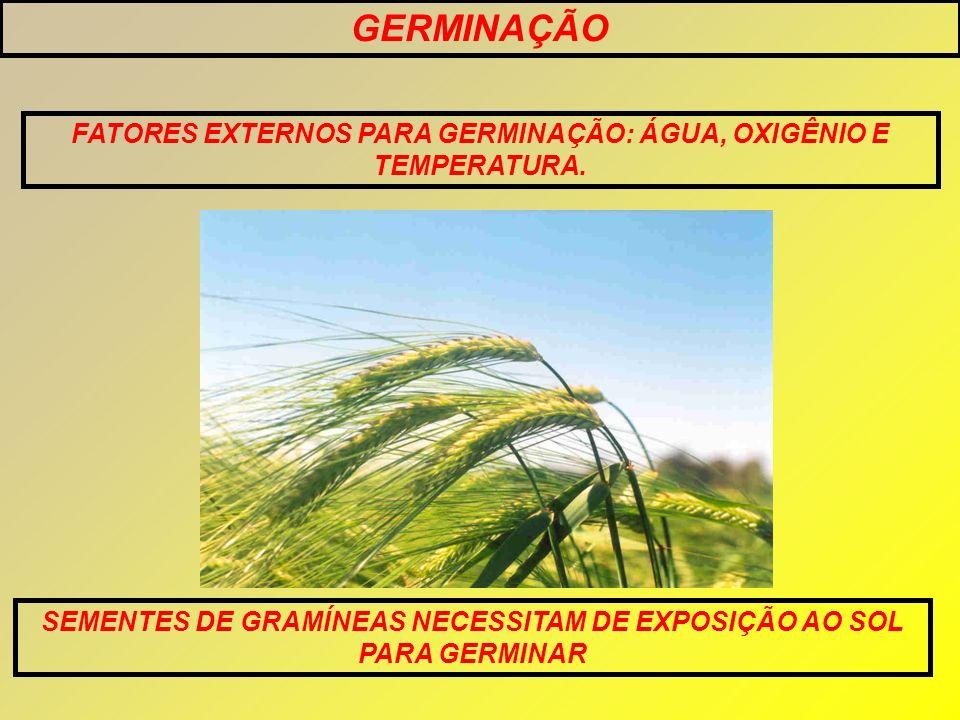 GERMINAÇÃO FATORES EXTERNOS PARA GERMINAÇÃO: ÁGUA, OXIGÊNIO E TEMPERATURA. SEMENTES DE GRAMÍNEAS NECESSITAM DE EXPOSIÇÃO AO SOL PARA GERMINAR