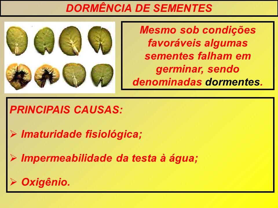 DORMÊNCIA DE SEMENTES Mesmo sob condições favoráveis algumas sementes falham em germinar, sendo denominadas dormentes. PRINCIPAIS CAUSAS: Imaturidade