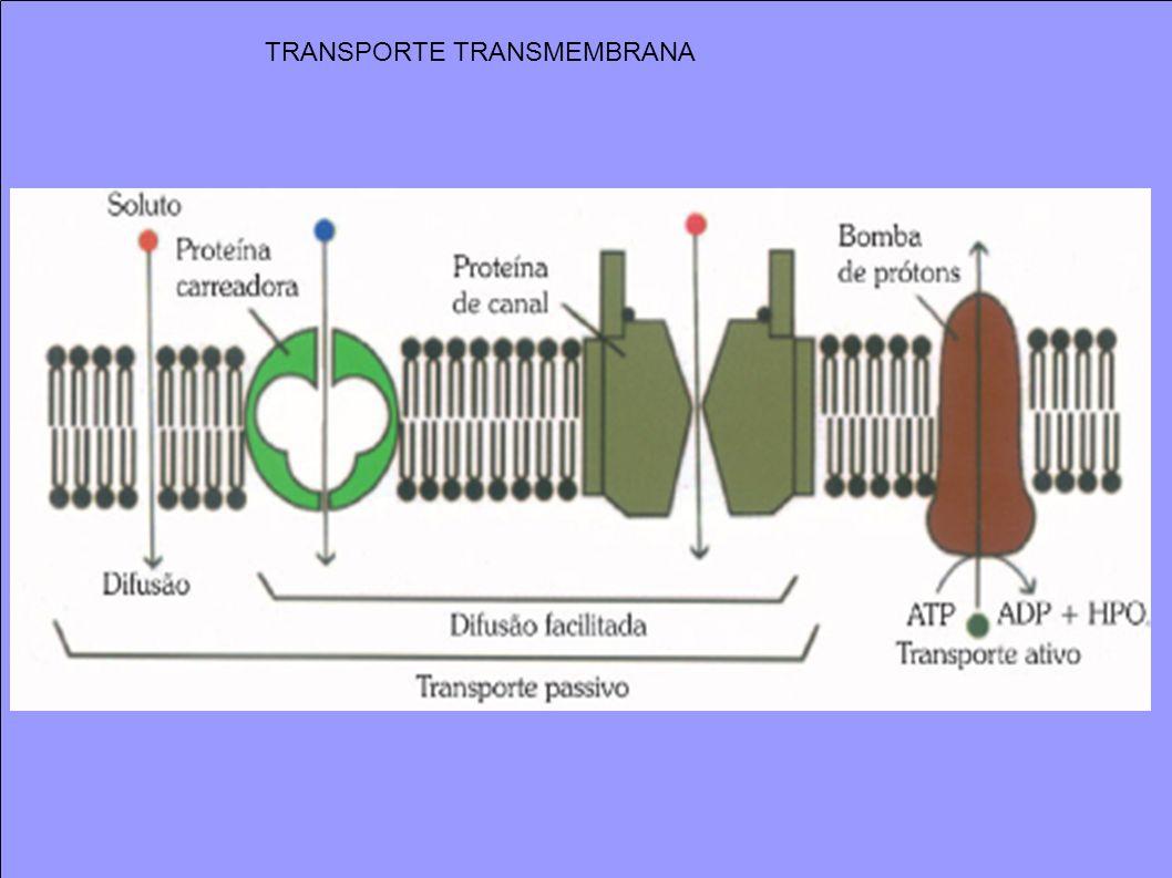 TRANSPORTE TRANSMEMBRANA