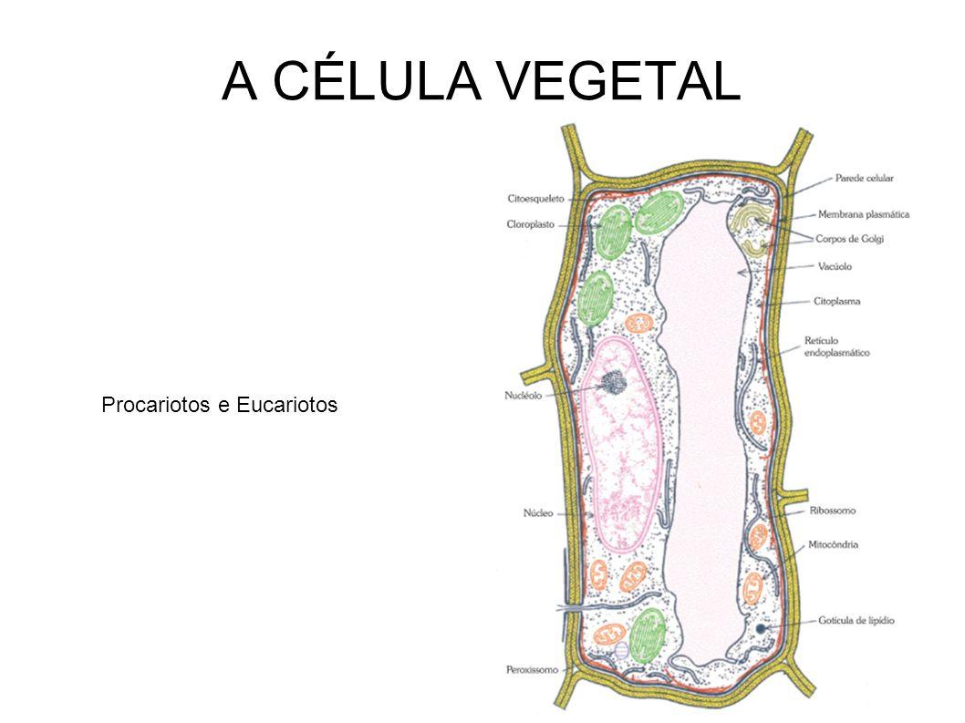 A CÉLULA VEGETAL Procariotos e Eucariotos