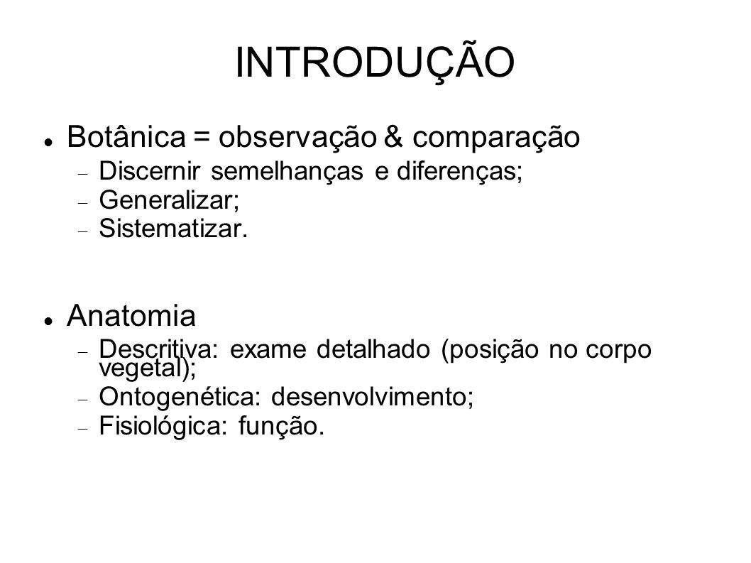 INTRODUÇÃO Botânica = observação & comparação Discernir semelhanças e diferenças; Generalizar; Sistematizar. Anatomia Descritiva: exame detalhado (pos