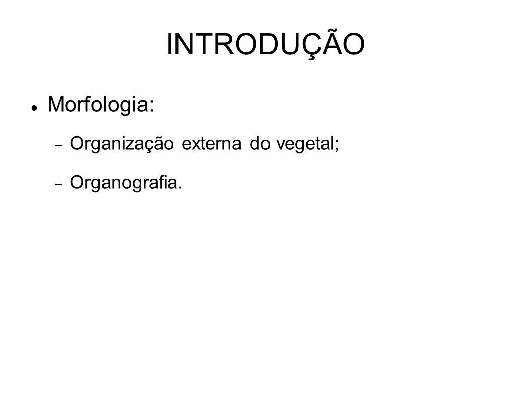 INTRODUÇÃO Morfologia: Organização externa do vegetal; Organografia.