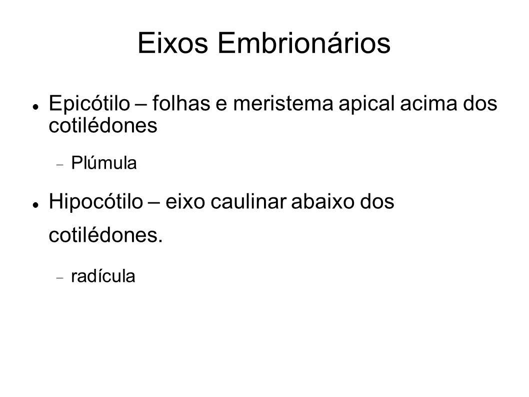 Eixos Embrionários Epicótilo – folhas e meristema apical acima dos cotilédones Plúmula Hipocótilo – eixo caulinar abaixo dos cotilédones. radícula