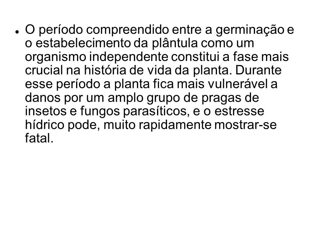 O período compreendido entre a germinação e o estabelecimento da plântula como um organismo independente constitui a fase mais crucial na história de