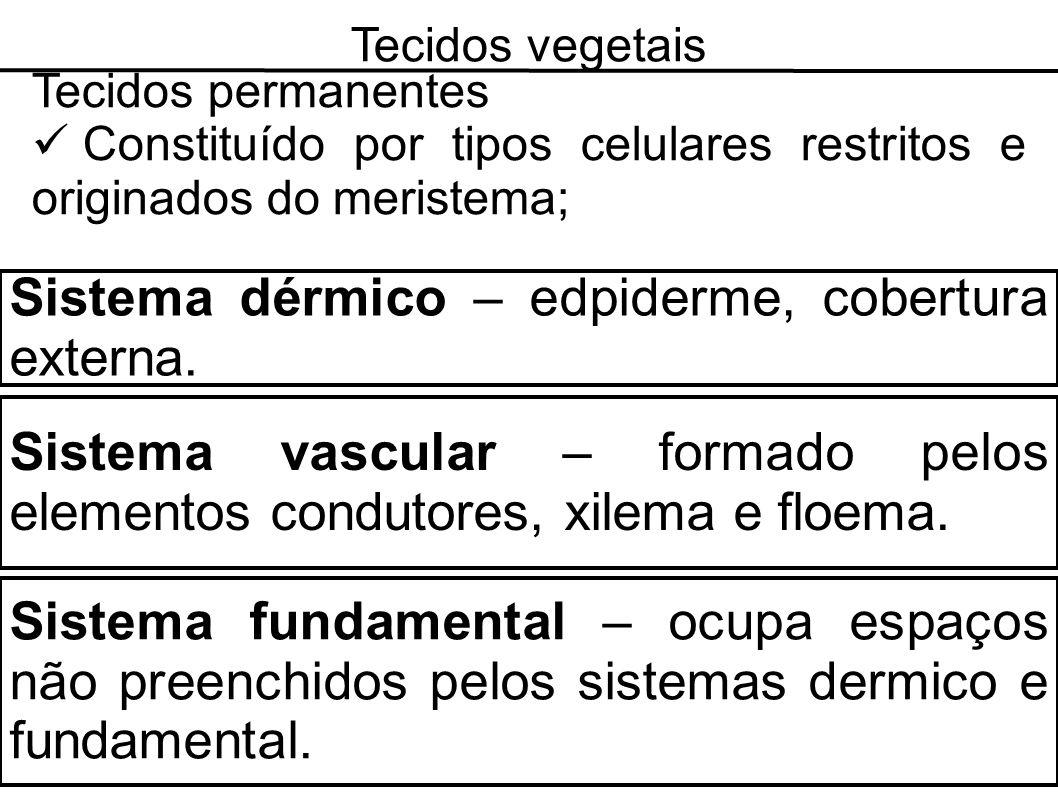 Tecidos vegetais Tecidos permanentes Constituído por tipos celulares restritos e originados do meristema; Sistema dérmico – edpiderme, cobertura exter
