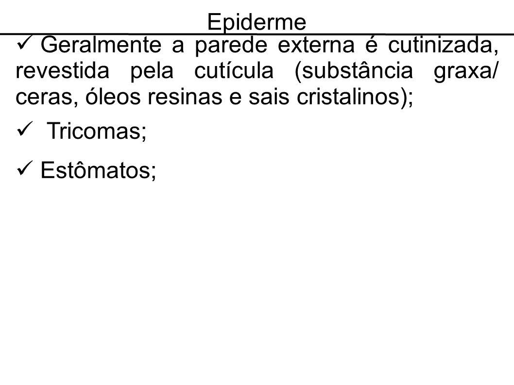 Epiderme Geralmente a parede externa é cutinizada, revestida pela cutícula (substância graxa/ ceras, óleos resinas e sais cristalinos); Tricomas; Estô