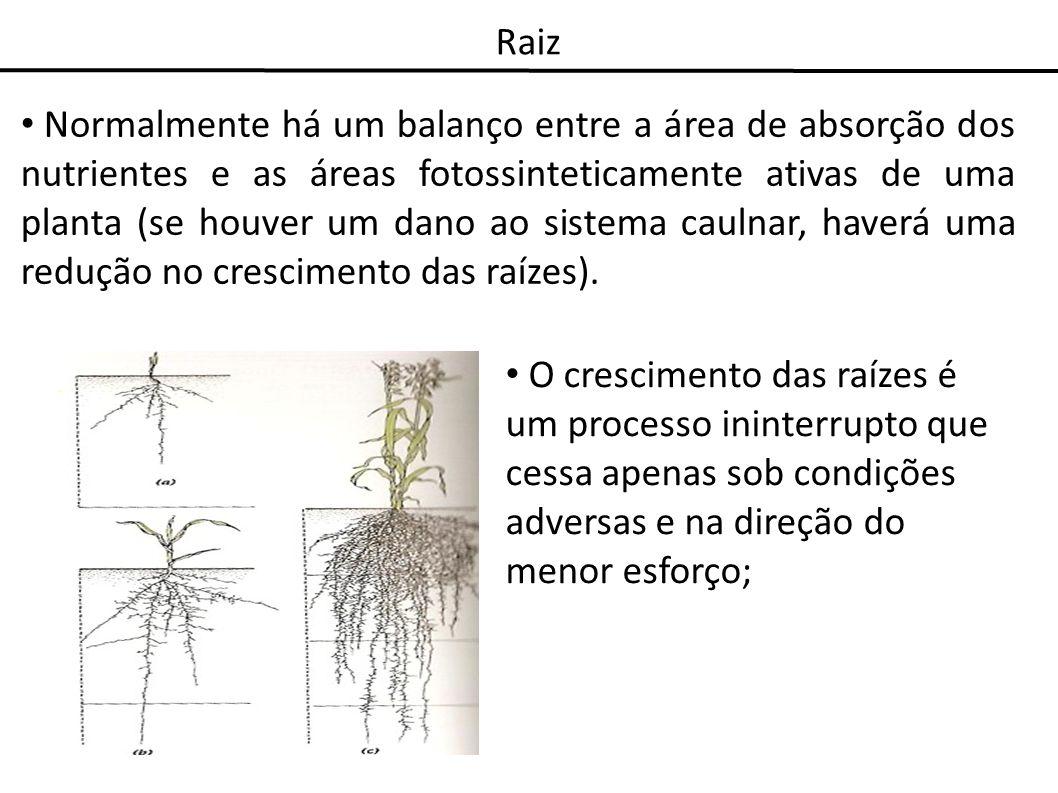 Raiz Normalmente há um balanço entre a área de absorção dos nutrientes e as áreas fotossinteticamente ativas de uma planta (se houver um dano ao siste