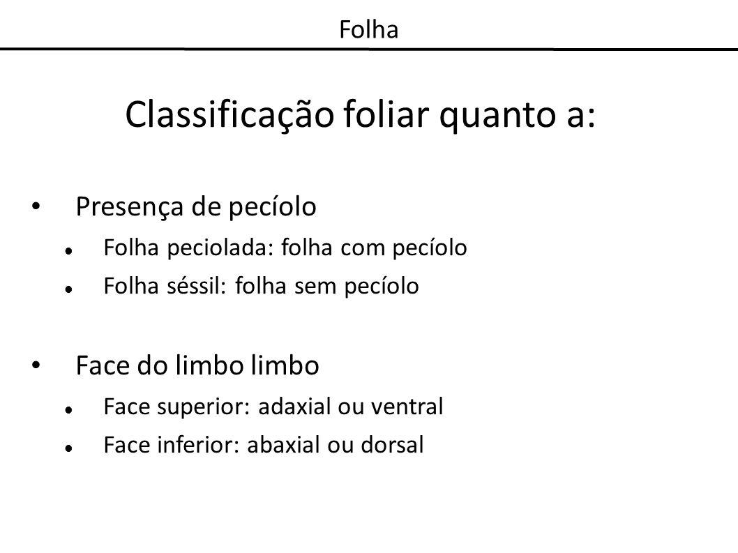 Folha Classificação foliar quanto a: Presença de pecíolo Folha peciolada: folha com pecíolo Folha séssil: folha sem pecíolo Face do limbo limbo Face s