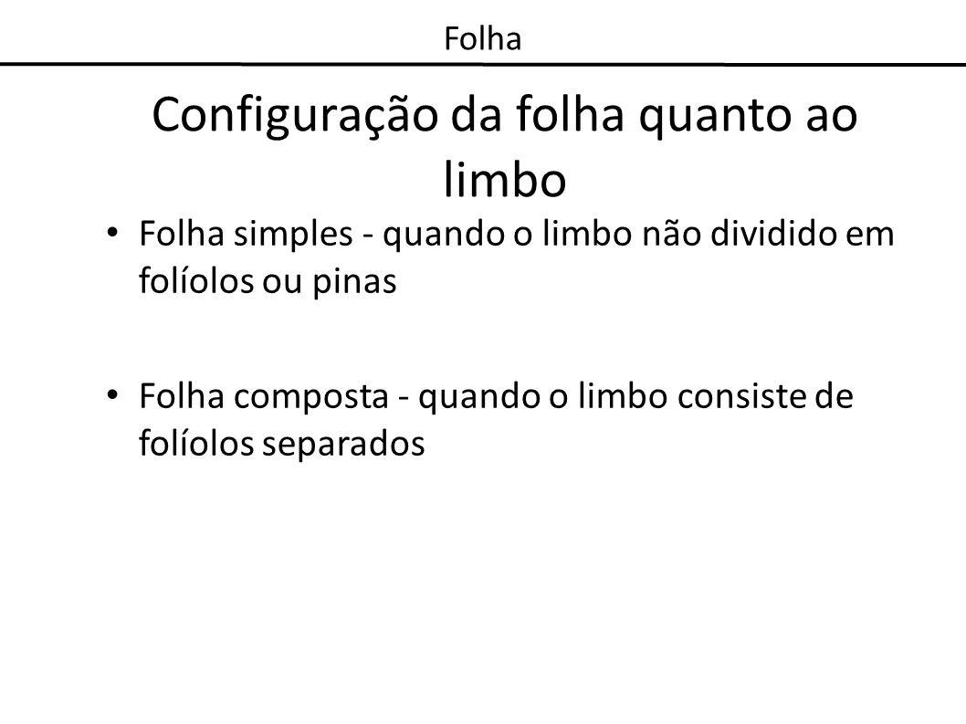 Configuração da folha quanto ao limbo Folha simples - quando o limbo não dividido em folíolos ou pinas Folha composta - quando o limbo consiste de fol