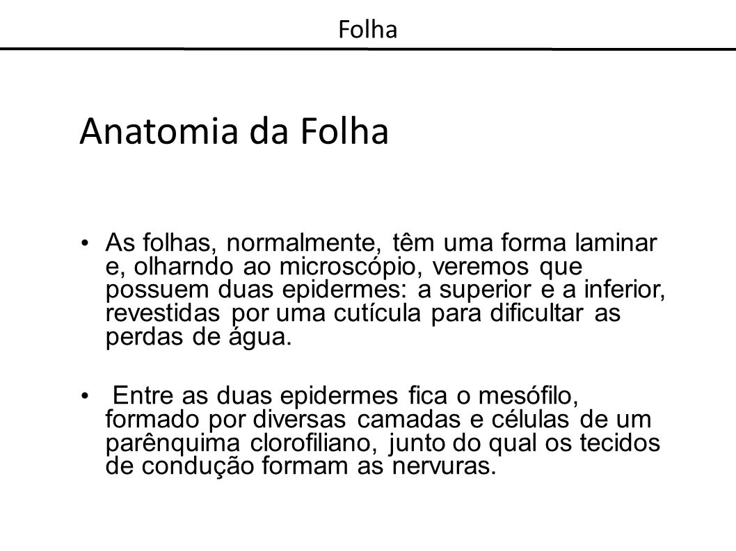 Anatomia da Folha As folhas, normalmente, têm uma forma laminar e, olharndo ao microscópio, veremos que possuem duas epidermes: a superior e a inferio