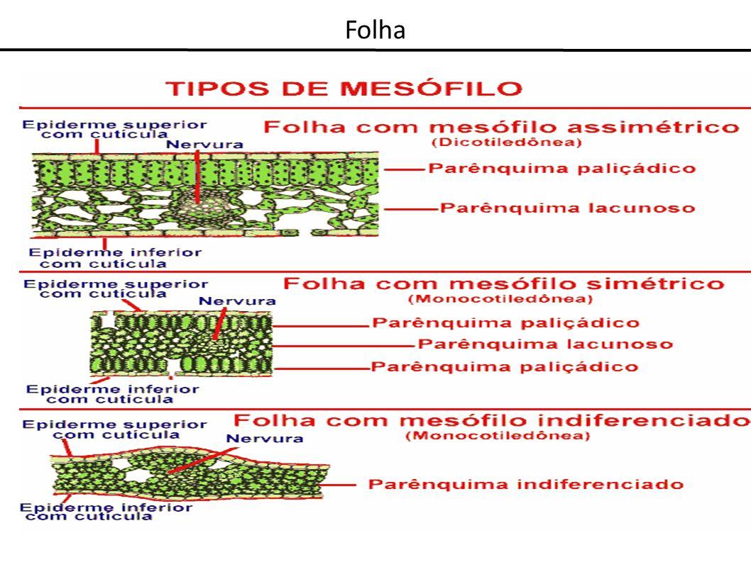Flor Estrutura complexa, presente nos vegetais vasculares e destinado a reprodução; São as estruturas em que se baseiam os taxonomistas para classificar e identificar plantas; As estruturas componentes de uma flor são anatomicamente semelhantes a de uma folha.