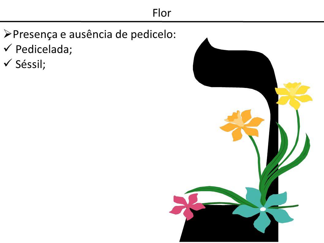Flor Presença e ausência de pedicelo: Pedicelada; Séssil;